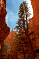 Bryce Canyon 140607-8823 5D