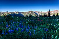 Crested Butte 2014-07