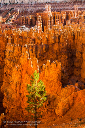 Bryce Canyon 140607-8849 5D