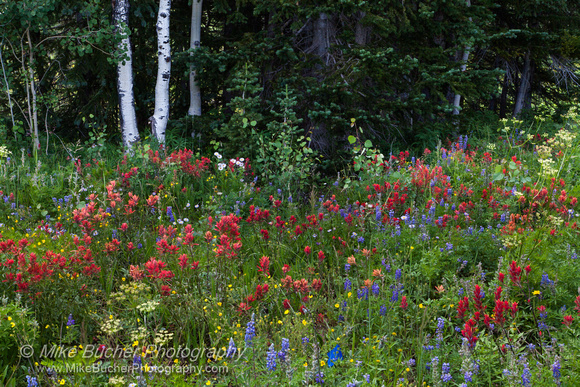 Rabbit Ears Pass 140806-0029 5D
