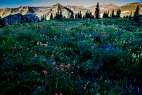 Crested Butte 140722-9689